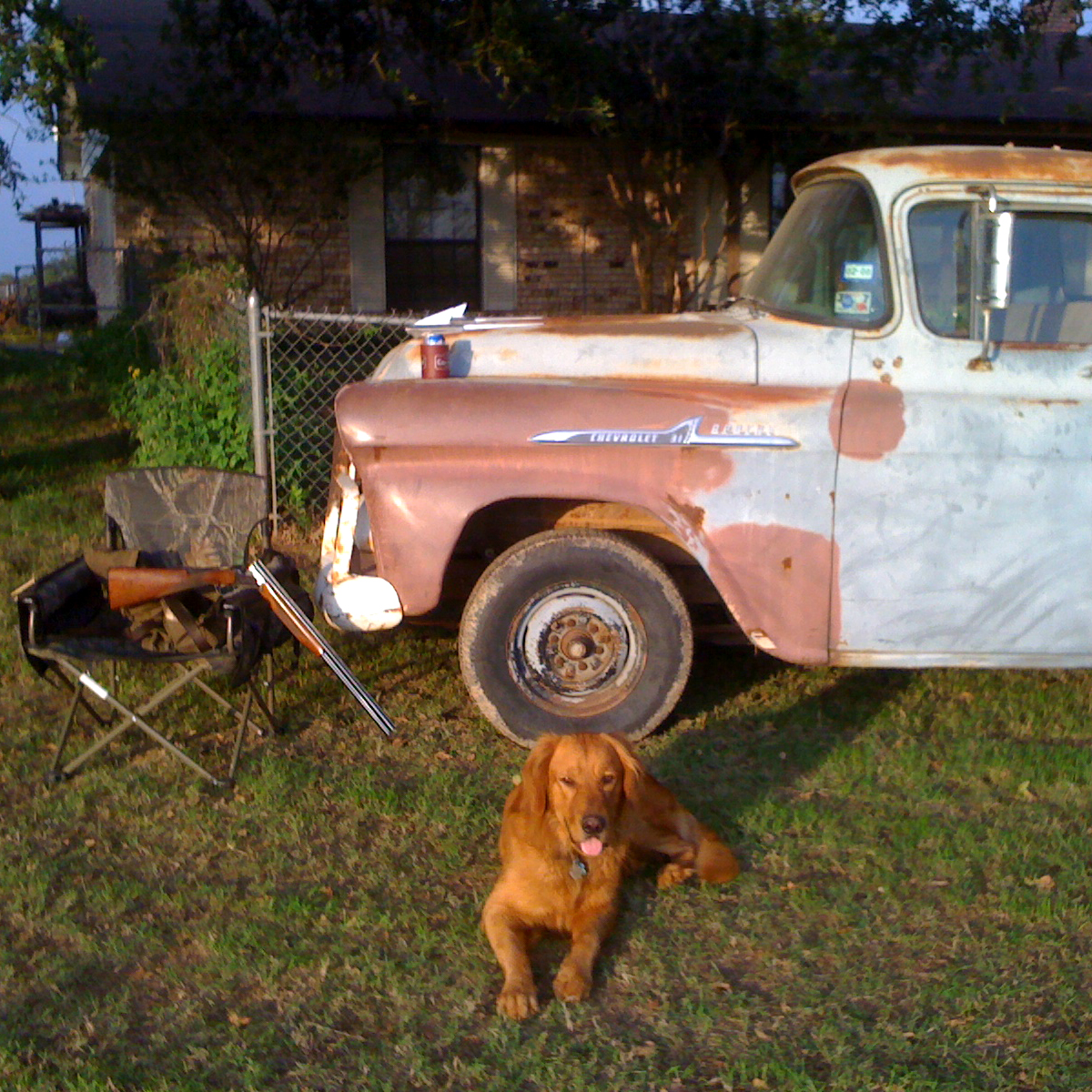 Dog and truck